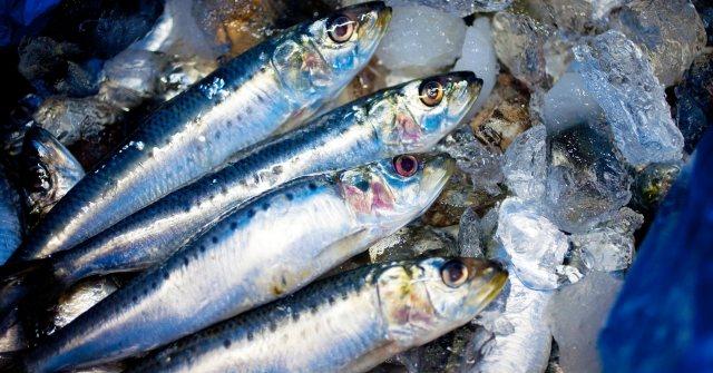 魚釣りの餌はムシングのイソメかフィッシューイーターつりでは小魚を