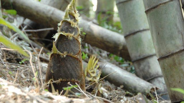 竹を切りたいときのレシプロソーの替刃