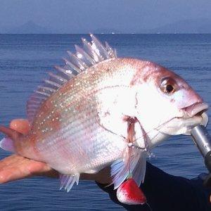 タイラバ-初心者でも釣れた道具や仕掛けと釣り方!リールやロッドも紹介
